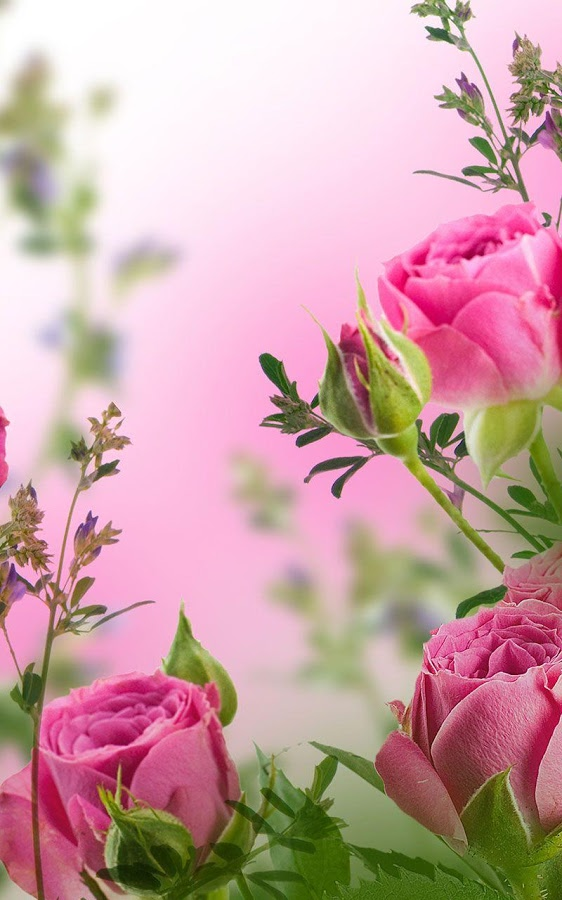 Top 10 beautiful flowers live wallpapers apps for android pink flowers live wallpaper altavistaventures