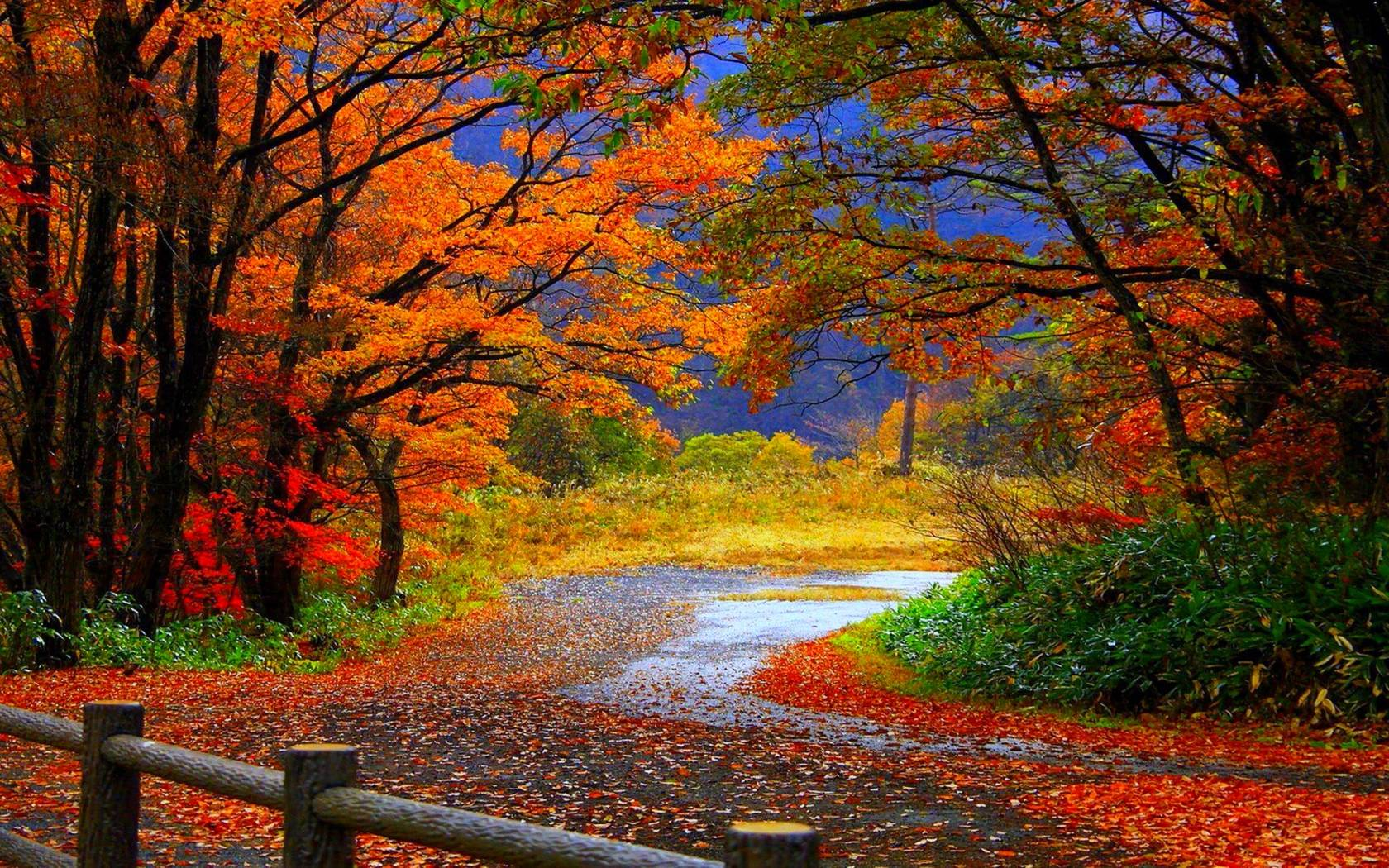 Top 6 Android Autumn Live Wallpapers To Enjoy Falling Leaves